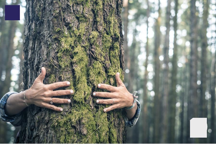 Soutenons les forêts françaises